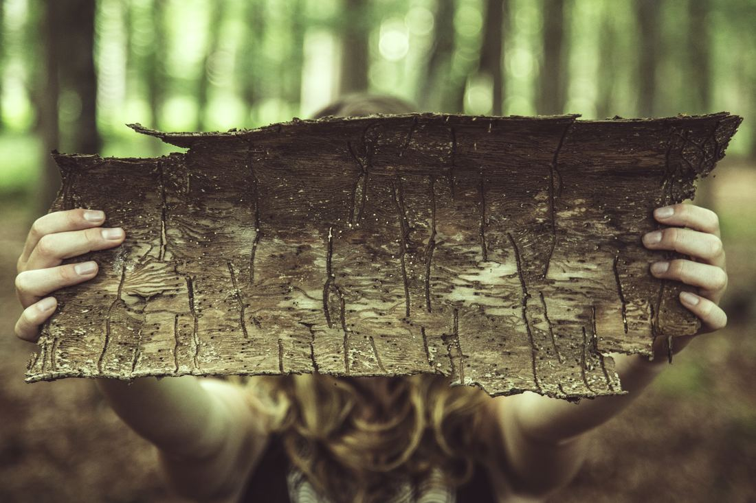 girl holding up scarred tree bark